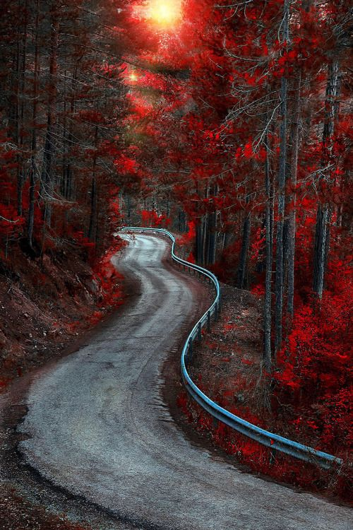 Red forest in Cuenca, Spain. By Alfon