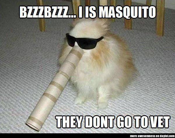 Nice disguise, dog