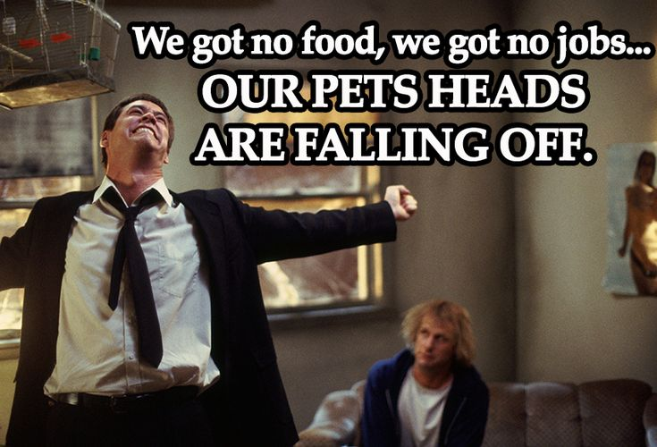 Image result for our pets heads are falling off