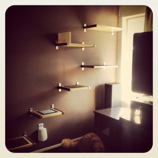 Diy cat shelves for the cats pinterest