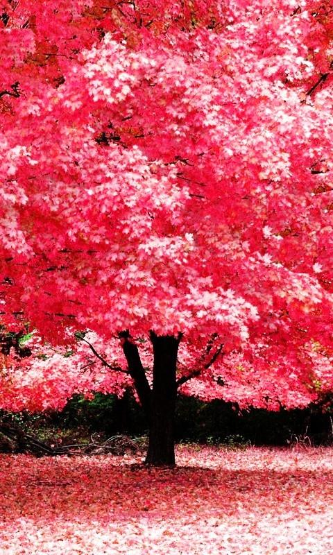 Arboles floridos