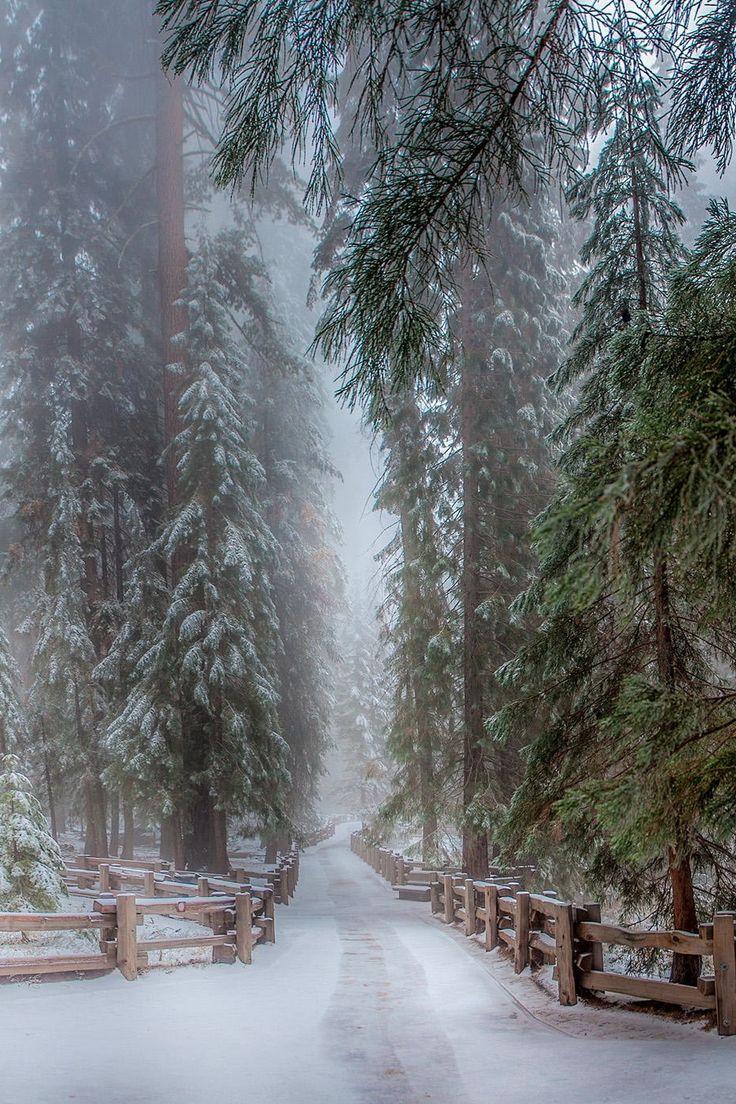 decepticun:  Sequoia Trees California |Ramelli Serge