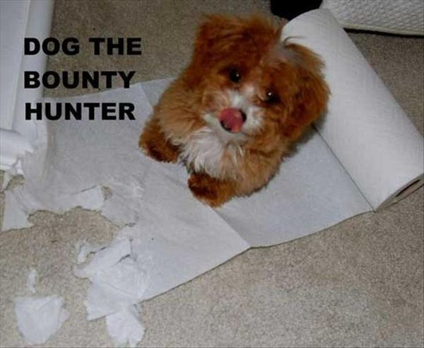 Dog, the Bounty Hunter- funny puppy picture #puppy