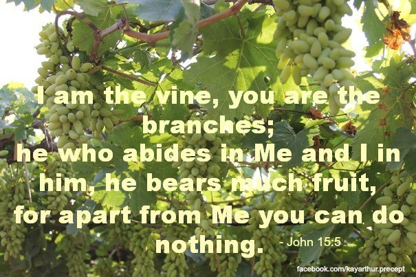 In whatever manifestation, the movement is the vine.