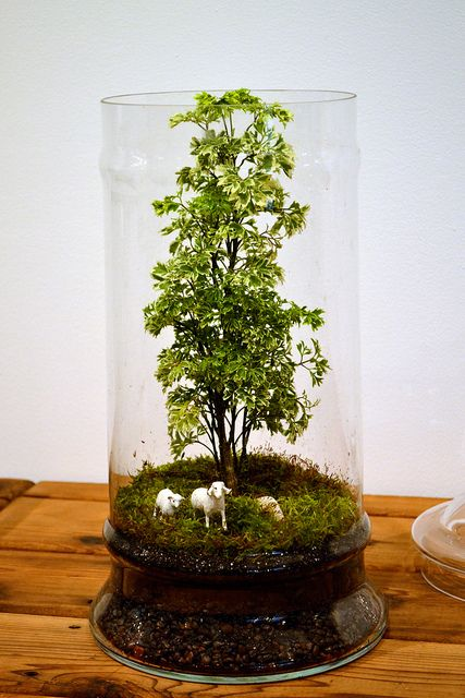 I wish it wasn't so hard to keep these things alive and mold free...this terrarium is really cool!