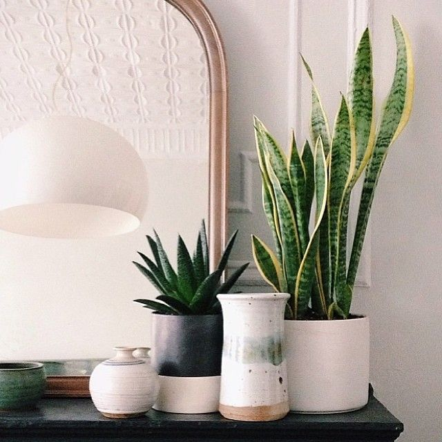 Beautiful and simple.the artificial Sanseveria plant is perfect for bring a splash of color and texture into you interior