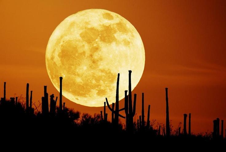 Image result for pics desrt full moon