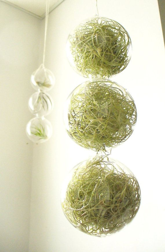 spring green 3 globes filled with airplants by SASSYspaces on Etsy, $29.00
