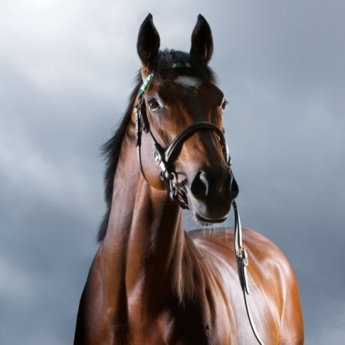 Handsome and heroic,FRANKEL is probably the greatest racehorse of all time. Racing analytics firm Time Form has given him the highest rating (147) of any horse in modern times. He won 14 consecutive races, an unequalled record, in a career that continues in stud. Frankel's progeny also number as the most awaited foals, fetching record prices that qualify them for this list of the world's most expensive horses.