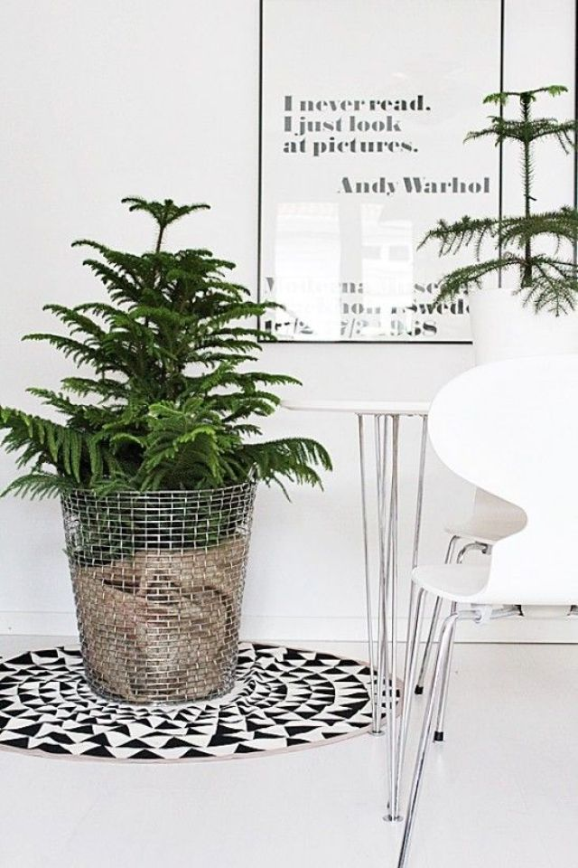 wire basket planter