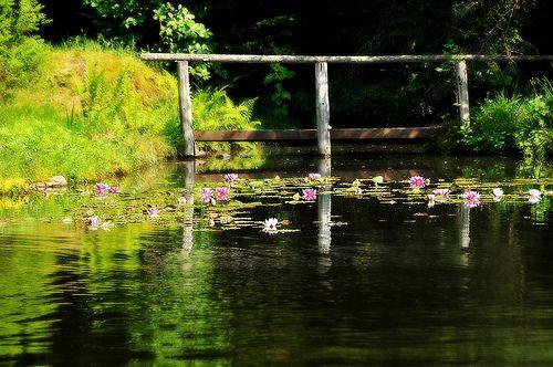 ~ ~ Le petit pont aux nénuphars ~ ~