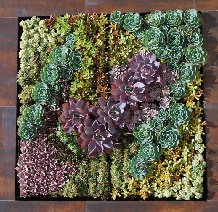 a succulent wall art products i love pinterest on wall art id=66607
