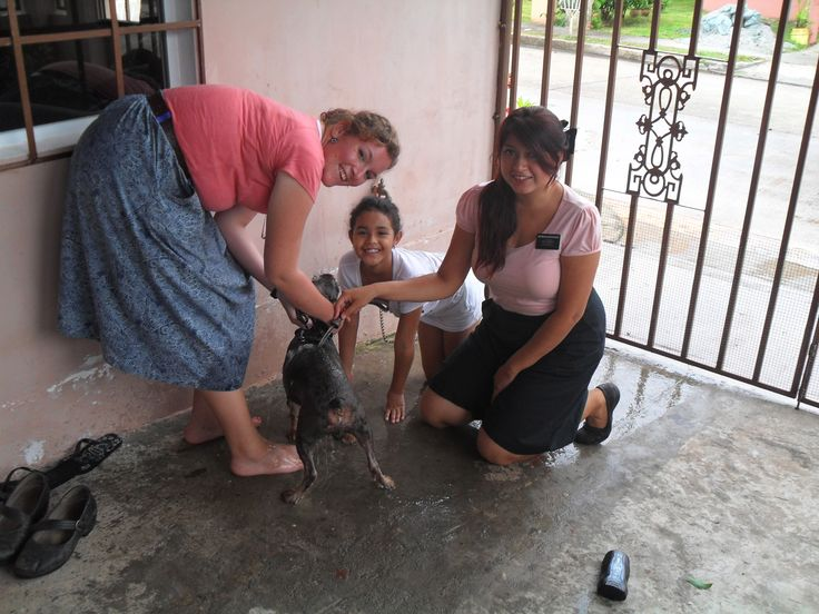 washing a dog as a service for some members, I really had fun doing that