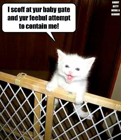 Kitten escape...