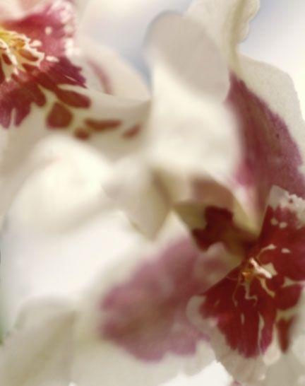 Sandi Fellman Photography | Flowers Color | www.SandiFellman.com