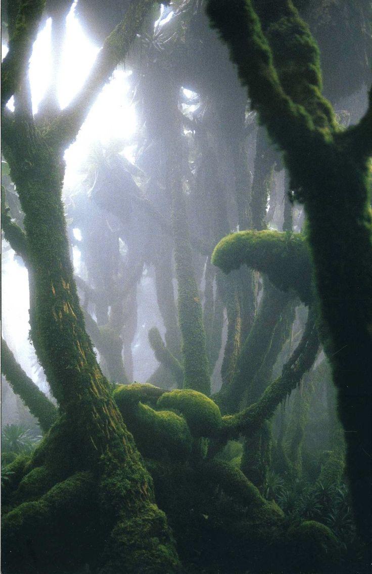 Fog EnshroudedRain Forest in Rwanda's Virunga Mountains~ by Michael Nichols!