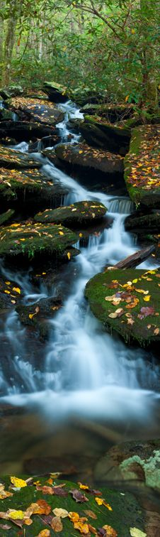 Awesome View: Panoramic image of a stream in Great Smoky Mountains National Park