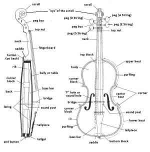 Diagram of a string instrument | Musical Instruments