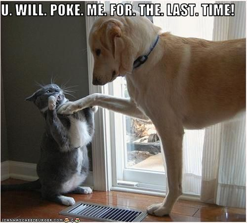 A dog tests the cat's patience and tries to provoke a fight.