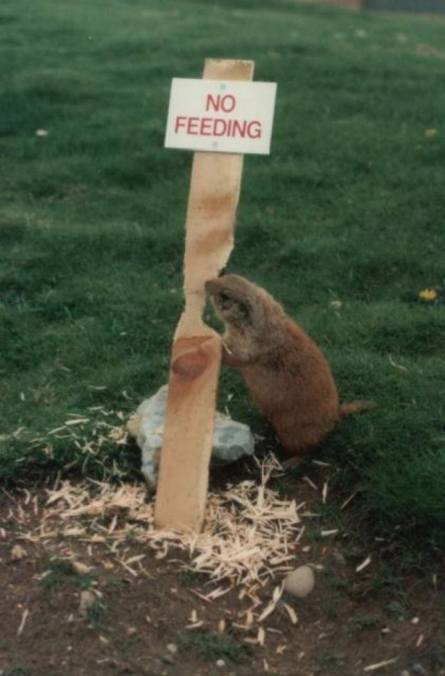 Funny Animal Signs......soooo tired of the beaver chopping down our willow tree!!