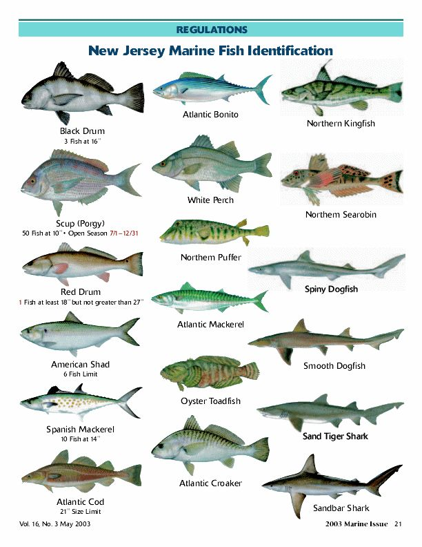 Aninimal Book: marine fish with names - Cars with Fish Names 2017 - Fish ...