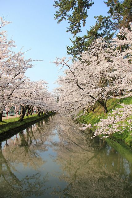 Hirosaki Sakura Festival, Japan