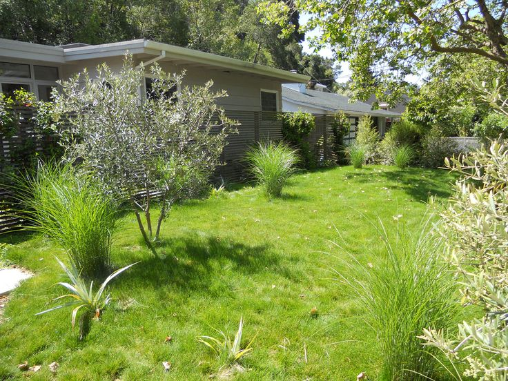 no mow lawn | Backyard landscape ideas | Pinterest on No Mow Backyard Ideas  id=57083