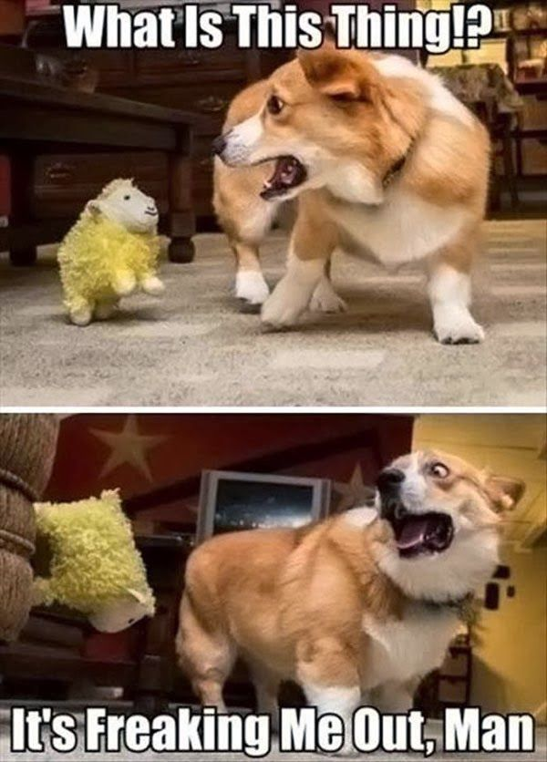 ... Newest Pictures Funny Dogs Funny Cats Funny Animals Funny Captions