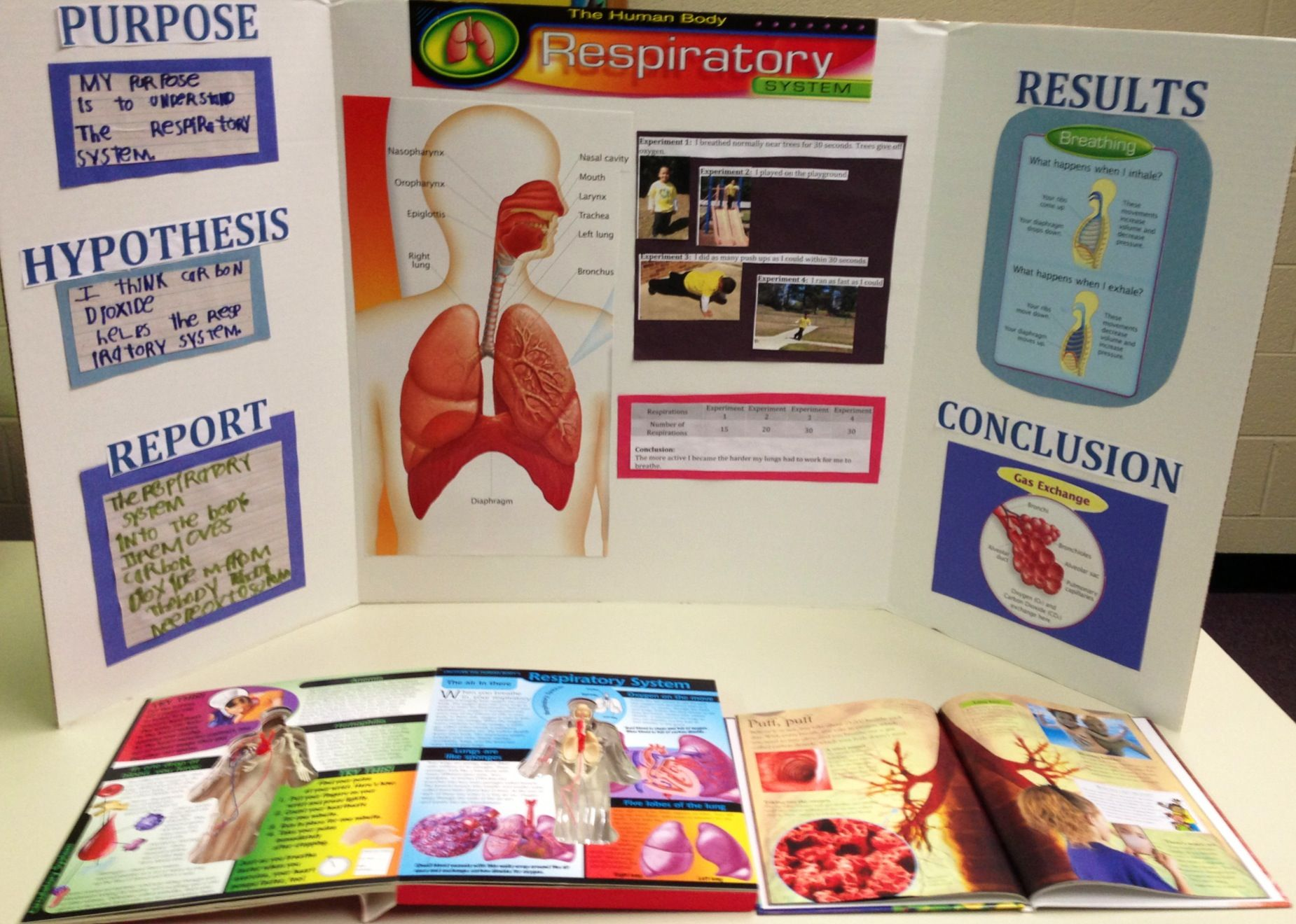 Zion's Respiratory System Project