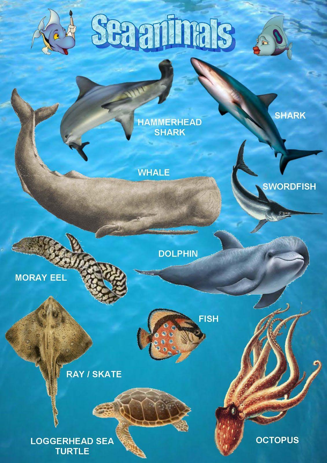 Sea Animals Poster 1
