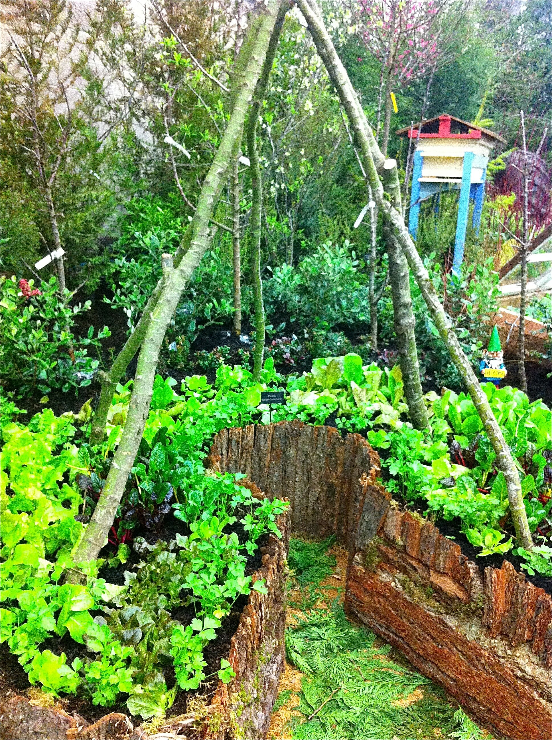permaculture garden design | Gardening | Pinterest on Backyard Permaculture Design id=19445