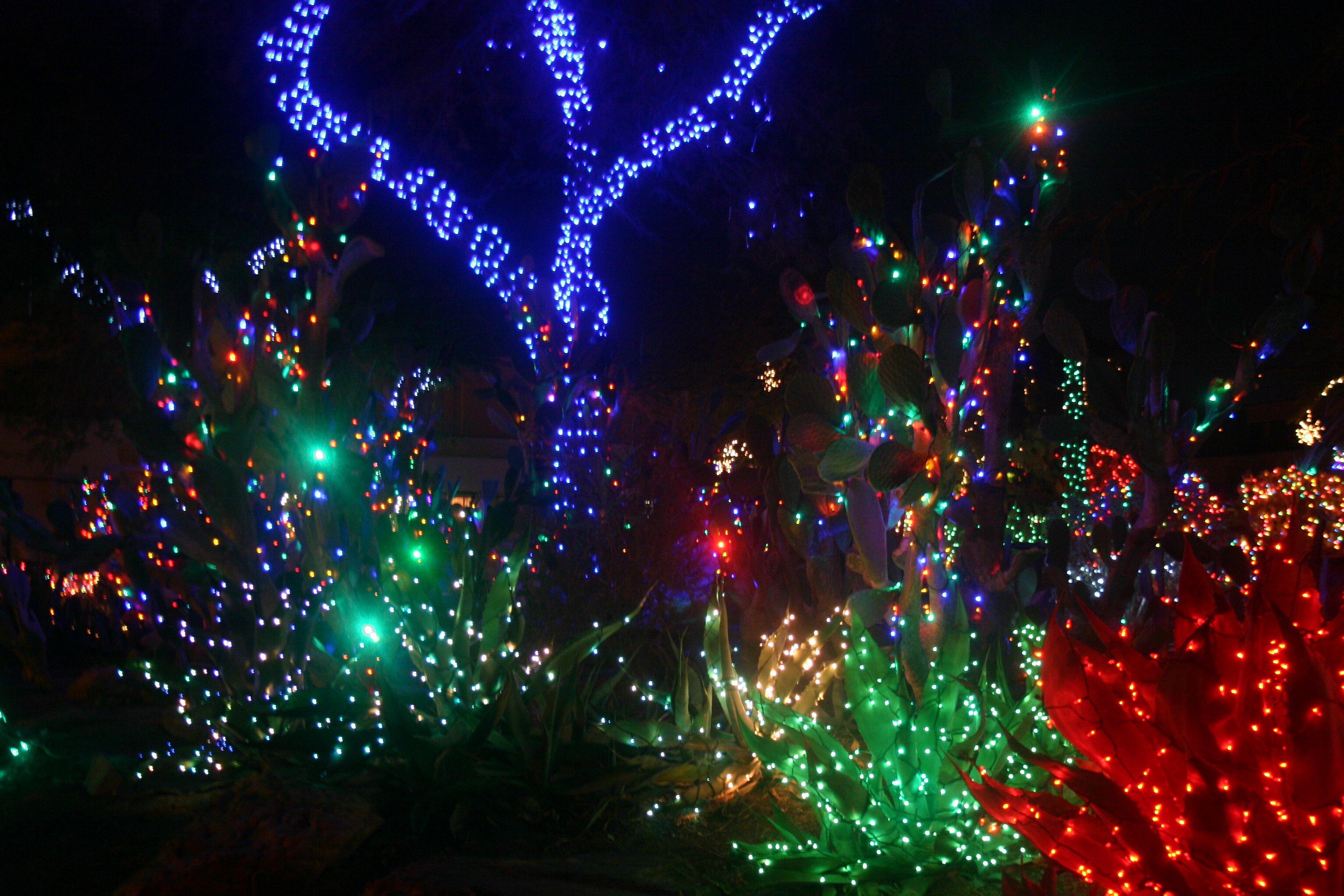 Christmas Lights Bushes
