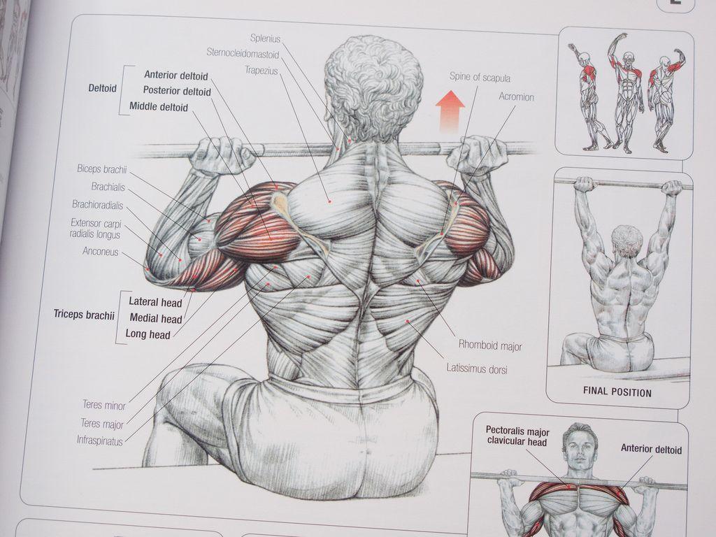 Fantastic Strength Training Anatomy By Frederic Delavier Ornament ...