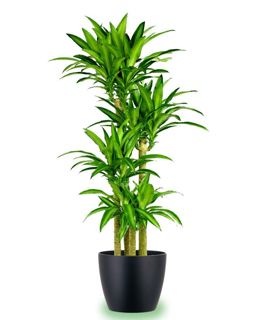 Beautiful Indoor Plants