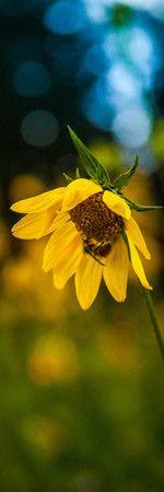 ape su un fiore di campo