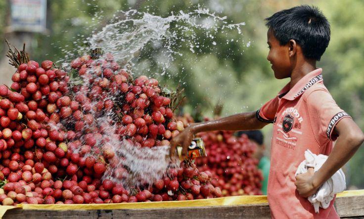 Allahabad, India Un bambino indiano Venditore di Frutta bagna la SUA merce per mantenerla fresca.  (AP Photo / Rajesh Kumar Singh)