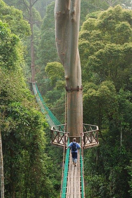 Rainforest Canopy Walkway, Borneo photo via shiela