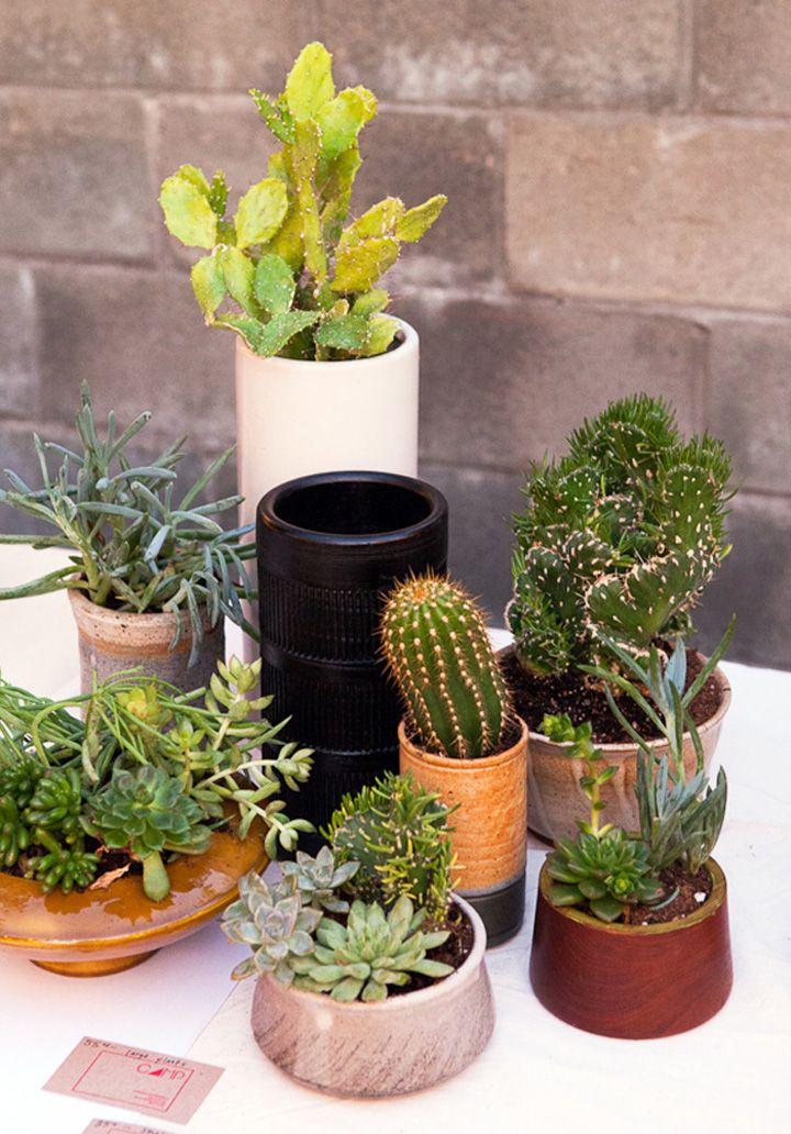 A Cactus Collection