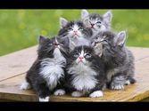 These little fur balls!