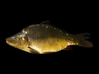 SZ-Magazin: Dieser Fisch oder keiner