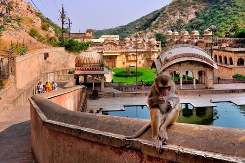 Image result for Get Up Close to Monkeys in Jaipur, Rajasthan