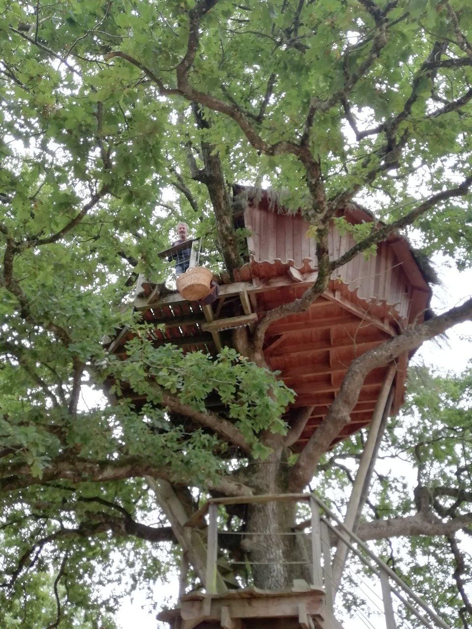 cabanes dans les arbres brin de