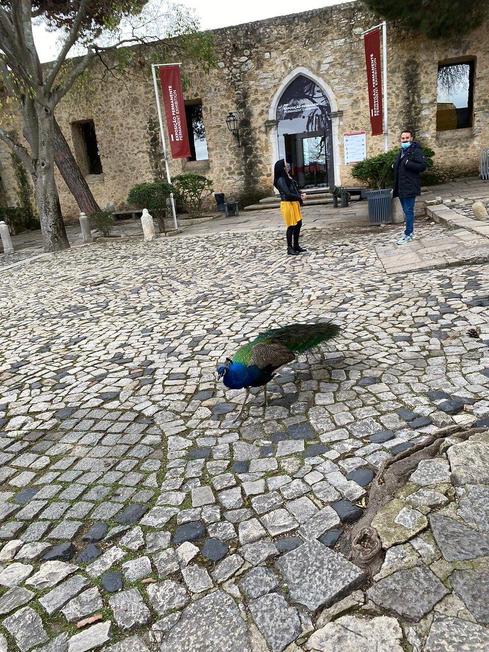 Castelo De Sao Jorge Lisbonne 2021 Ce Qu Il Faut Savoir Pour Votre Visite Tripadvisor