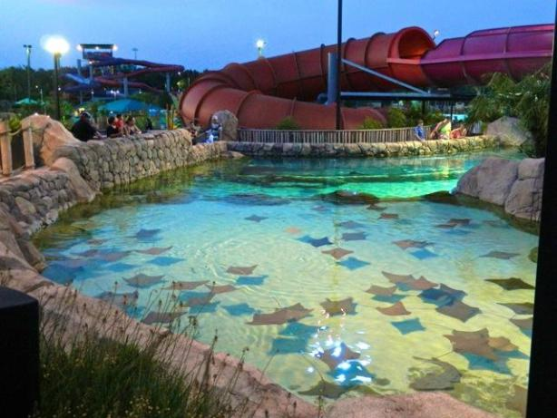 Seaworld+San+Antonio+Vacation+Packages
