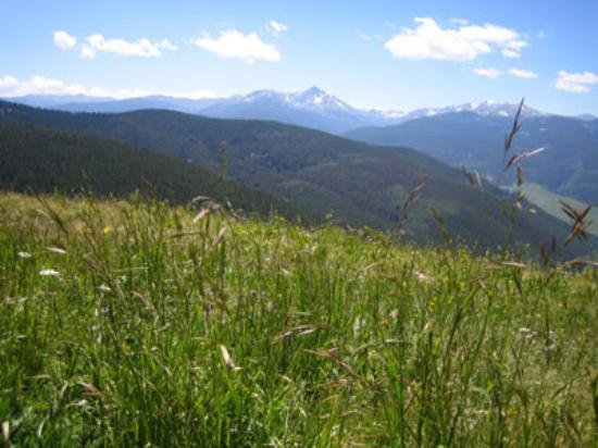 Vail, CO: Summer on the mountain