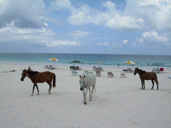 Horses on the Beach, Kommetjie