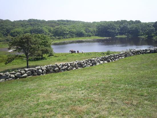 Farm Pond Martha Vineyard