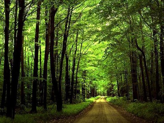 mazandaran-woods.jpg