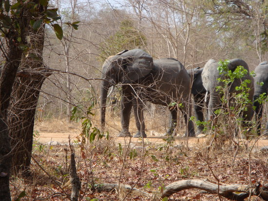 elephants in the morning - ブルキナファソの観光地を一覧〜DMM英会話〜