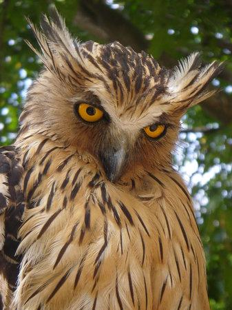 Photos of Penang Bird Park, Penang Island